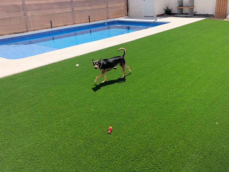piscina con césped artificial para mascotas